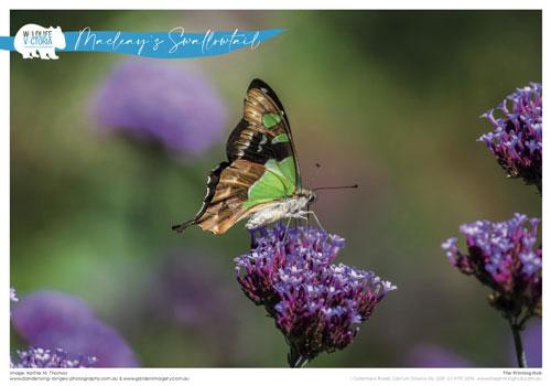 bushfire-calendar-pages-12